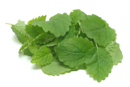 botanical medicine: Melissa, lemon balm, Melissa officinalis, medicinal herb and spice