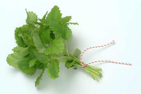 melissa: Melissa, lemon balm, Melissa officinalis, medicinal herb and spice