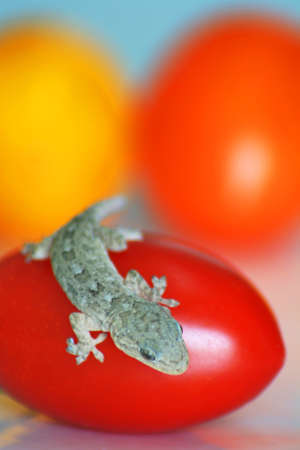 a gecko and some tomatoes