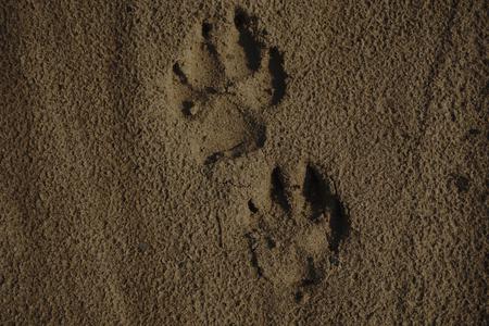 발의 세부 사항 모래에 인쇄합니다. 스톡 콘텐츠