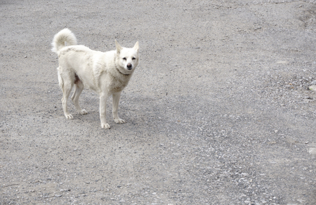 white happy dog on the pavement