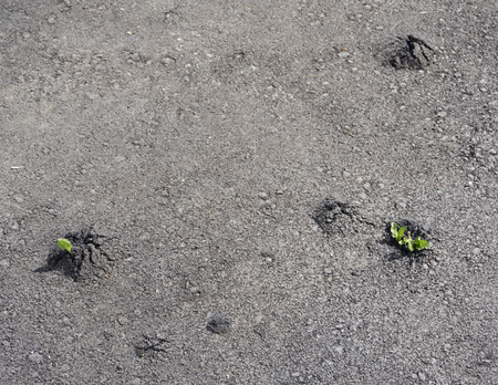 green plant in cracked asphalt road texture