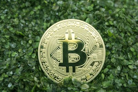 bitcoin in the green swamp