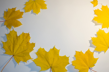 Yellow autumn rowan leaves. with copy space.