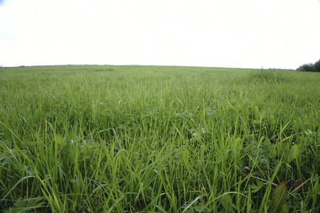 Background image of lush grass field under blue sky Stock Photo