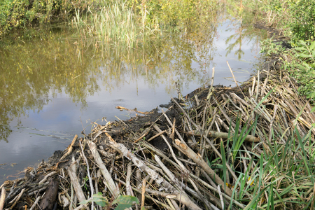 Beaver Dam and pond, the Eastern part