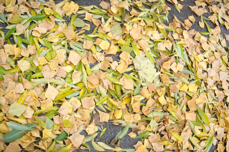 Fallen yellow Leaf on the road sprawled