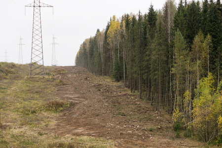 Clearing cut in forest so power lines lines could be put up