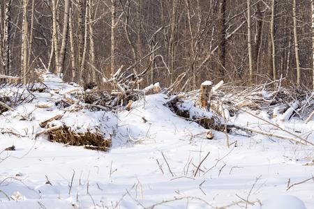 Broken tree under the snow Stock Photo