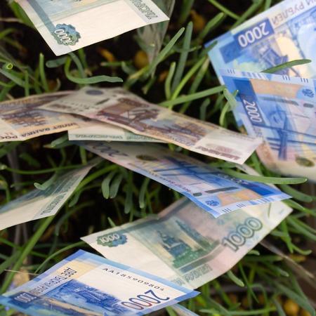 Australian dollars planted in garden bed Archivio Fotografico