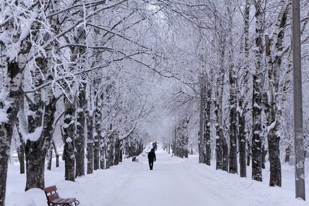 Foggy wintry morning in Saint-Petersburg Russia . People are walking to work on snow-covered avenue Stock Photo