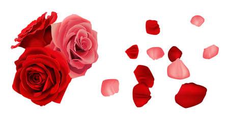 Rose with fallen petals Stock Vector - 22221802