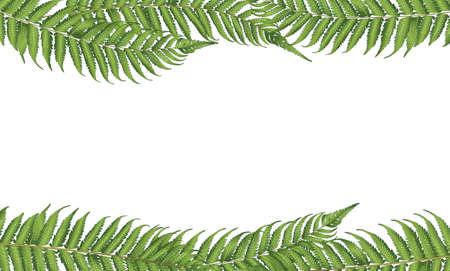 helechos: hoja nueva zelanda Vectores