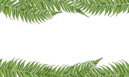 fern: new zealand leaf Illustration