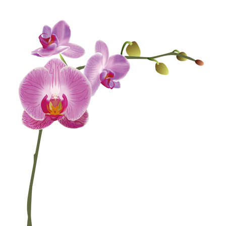 orchid branch: Orchid