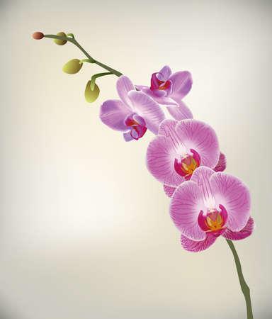 Orchid?e Banque d'images - 22222340