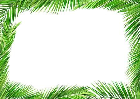 coconut tree: coconut leaves
