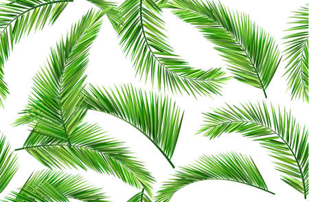 palm leaf: summer leaves