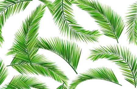 noix de coco: �t�, les feuilles