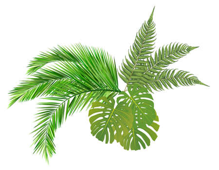 coconut leaf: leaves Illustration