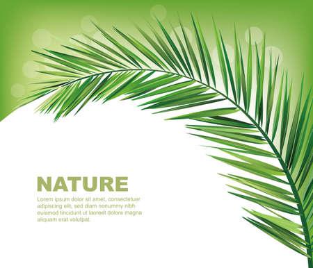 palm leaf: coconut leaves