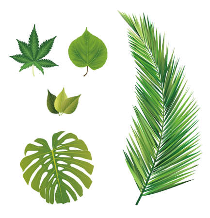 monstera leaf: leaves collection