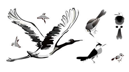 bird painting Vector