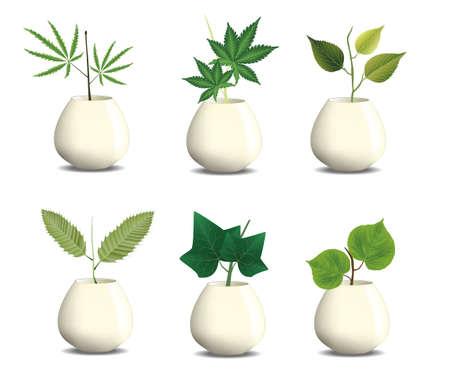 indoor garden: plant in pot