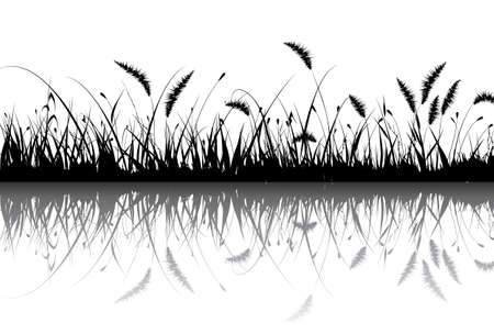 buisson: Grass Illustration
