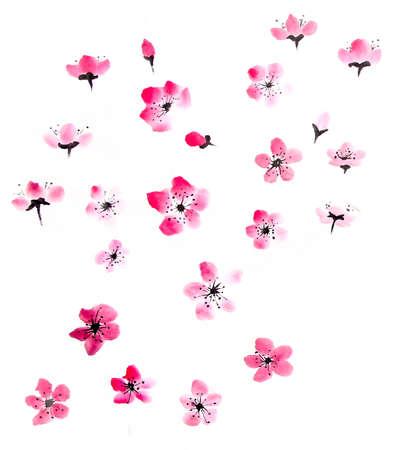 watercolor cherry blossom Reklamní fotografie - 55068328