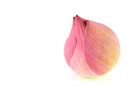 Pink lotus flower isolated on a white background photo