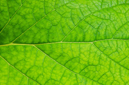 Green leaf of a plant pattern. photo