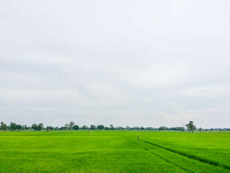 Medium rice fields photo