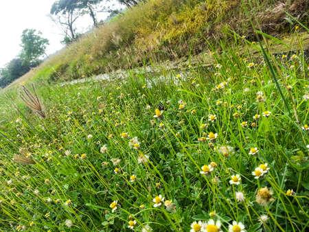 野草: Wild grass