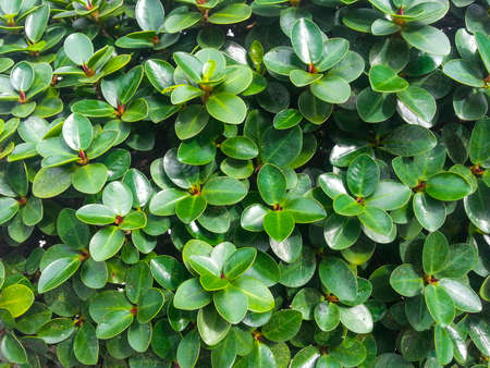 conceptions: Dense wall of green plants Stock Photo