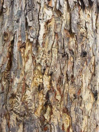 turbidity: Old tree bark and the turbidity Pokhara