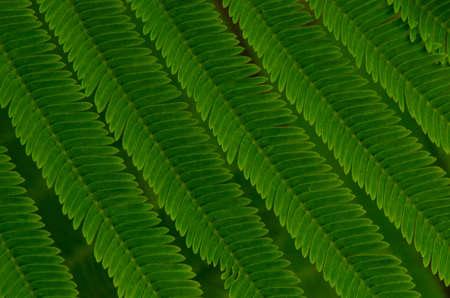 savant: Green leaves Stock Photo
