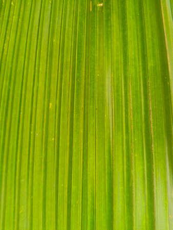 inhabits: leaves Stock Photo