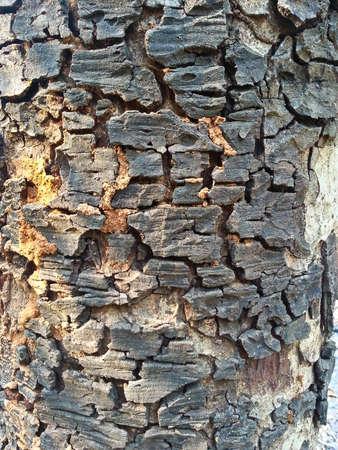 face in tree bark: Tree bark