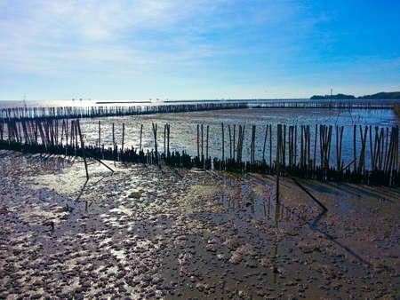 mangroves: mangroves, sea Stock Photo