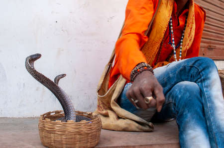 indian juggler playing with a pair of venomous king cobra Stock Photo