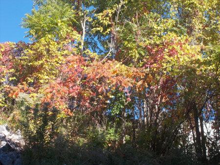 Beautifull autumn leaves