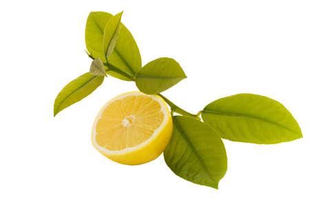 booting: Isolated sliced lemon - immune system booting fruit
