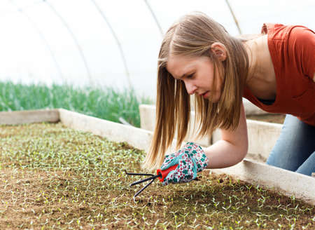 garden tool: Young gardener raising seedlings in heated frames.  Stock Photo