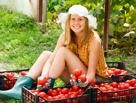 Young gardener sorting the beautiful harvested tomatoes. photo
