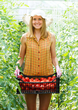 Young gardener holding a box of tomatoes in glasshouse culture. photo
