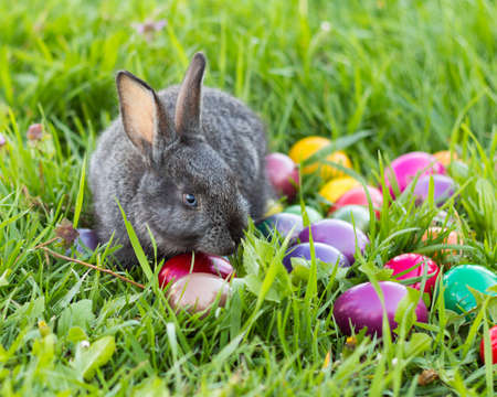 bunnie: Grey easter bunnie in fresh grass with colorful easter eggs. Stock Photo