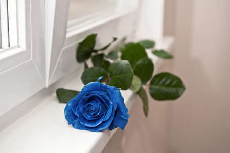 One blue rose lies on a windowsill on a light background color 2020. Stok Fotoğraf