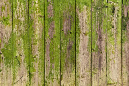 texture, background: old wooden boards with peeling green paint