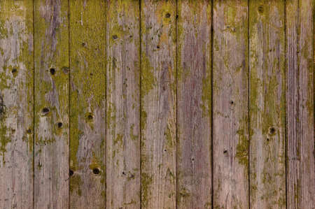 wooden fence texture: old boards with peeling green paint.